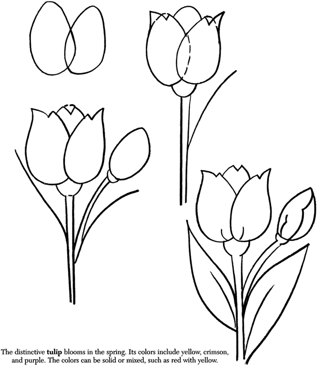 How to Draw Flowers #2